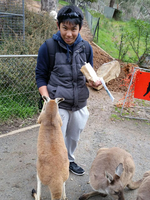 Feeding-Kangaroo-Ayumu-3